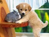 30 фото удивительной дружбы животных, которые радуют и разбивают все стереотипы