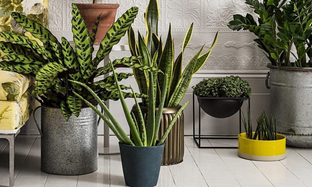 7 лучших комнатных растений для очистки воздуха в помещении
