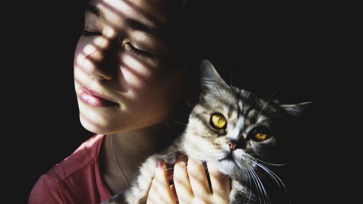 Кошачья любовь: как понять, что вы нравитесь кошке